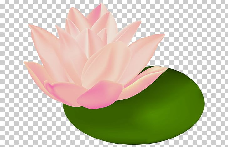 Sacred Lotus White Water Lily Egyptian Lotus Png Clipart Aquatic