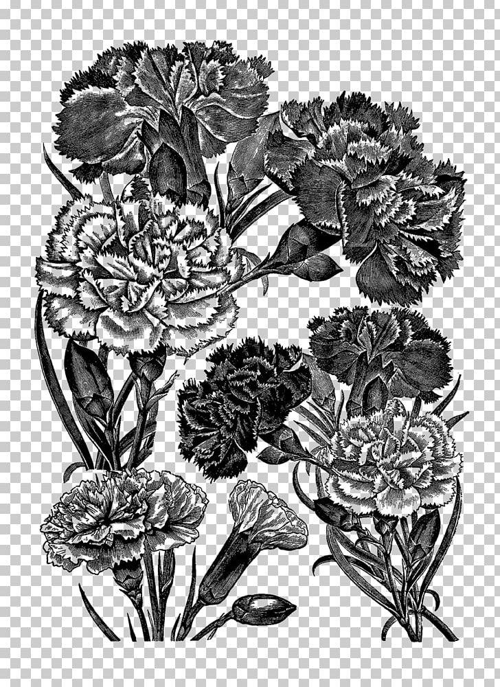 Flower Drawing Floral Design Carnation Png Clipart Art Black And