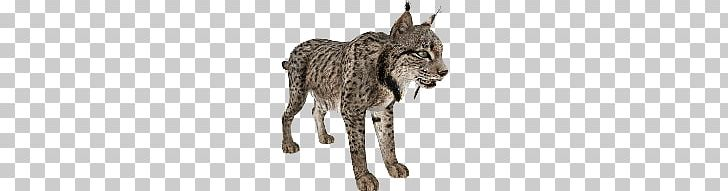 Lynx PNG, Clipart, Lynx Free PNG Download