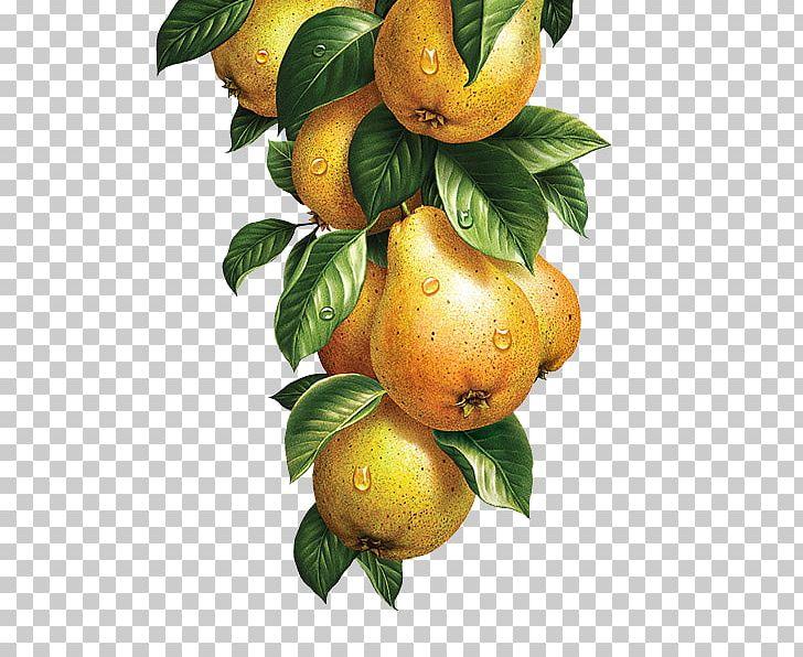 Lemonade Fruit Vegetable Watercolor Painting Illustration PNG, Clipart, Botanical Illustration, Botany, Calamondin, Citrus, Food Free PNG Download