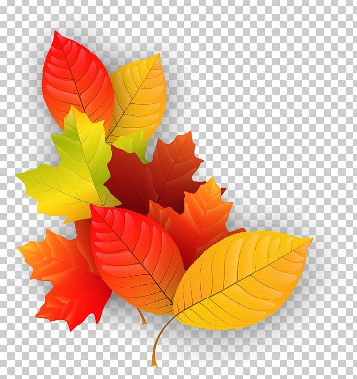 Maple Leaf Autumn PNG, Clipart, Autumn, Autumn Leaf Color, Download, Element, Flower Free PNG Download