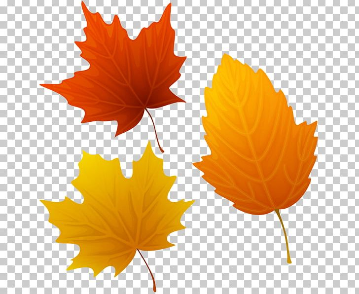 Autumn Leaf Color PNG, Clipart, Art, Autumn, Autumn Leaf Color, Autumn Leaves, Clip Art Free PNG Download