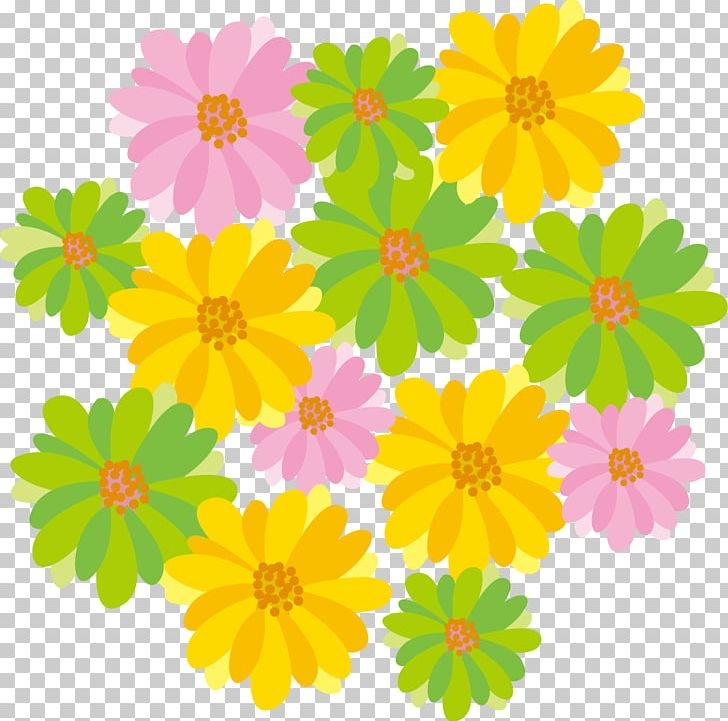 Clean Cartoon Flowers Png Clipart Annual Plant Child Chrysanths Cosmos Cut Flowers Free Png Download