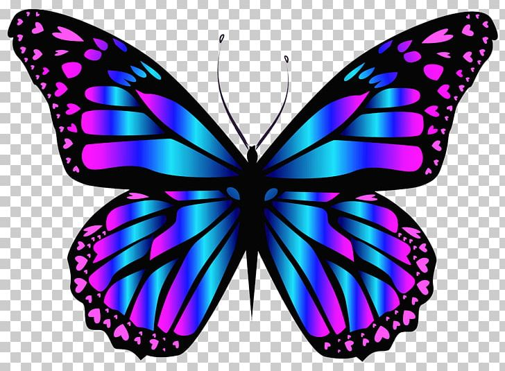 Butterfly purple. Blue png clipart brush