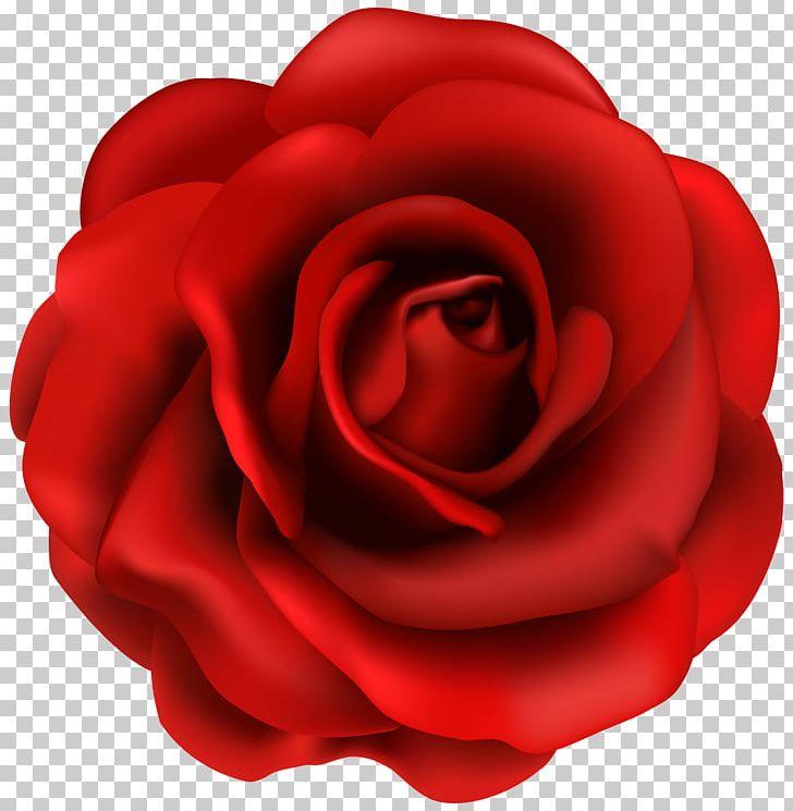 Rose Flower PNG, Clipart, Blog, Clipart, Clip Art, Closeup, Floribunda Free PNG Download