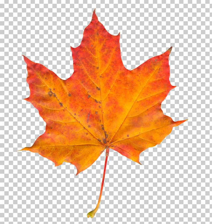Autumn Leaf Color PNG, Clipart, Autumn, Autumn Leaf, Autumn Leaf Color, Computer Icons, Display Resolution Free PNG Download
