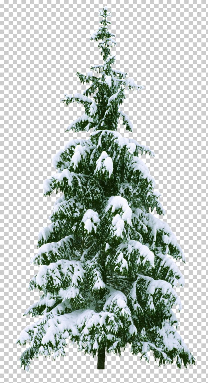 Christmas Tree New Year Tree Png Clipart Branch Christmas Christmas Decoration Christmas Lights Conifer Free Png