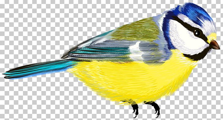 Bird Drawing PNG, Clipart, Animals, Beak, Bird, Cartoon, Chickadee Free PNG Download