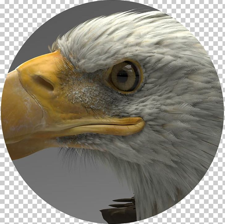 Eagle Artstation ZBrush Autodesk 3ds Max 3D Computer