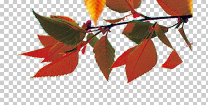 Maple Leaf Autumn Leaf Color PNG, Clipart, Autumn, Autumn Leaf Color, Autumn Leaves, Autumn Tree, Branch Free PNG Download
