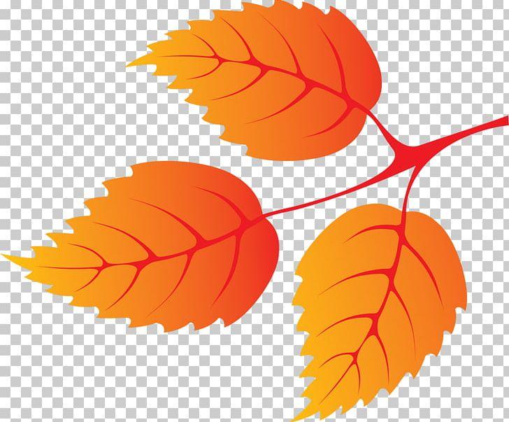 Autumn Leaf Color Petal PNG, Clipart, Art, Autumn, Autumn Leaf Color, Deciduous, Desktop Wallpaper Free PNG Download