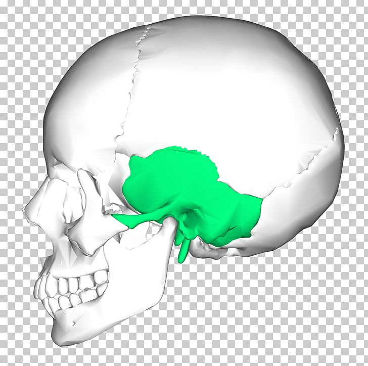 Temporal Bone Occipital Bone Skull Zygomatic Bone PNG, Clipart, Anatomy, Base Of Skull, Bone, Cranial Nerves, Fantasy Free PNG Download