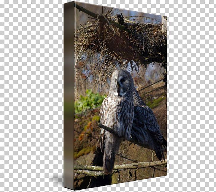 Owl Fauna Hawk Beak Feather PNG, Clipart, Beak, Bird, Bird Of Prey, Falcon, Fauna Free PNG Download