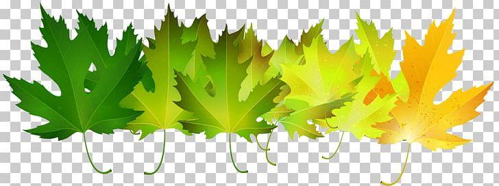 Autumn Leaf Color Green PNG, Clipart, Art, Art Green, Autumn, Autumn Leaf Color, Autumn Leaves Free PNG Download