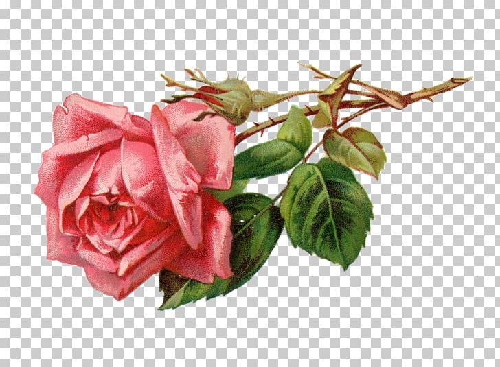 Rose Flower Pink PNG, Clipart, Artificial Flower, Cardmaking, Cut Flowers, Digital Image, Floral Design Free PNG Download