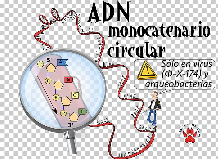 SsDNA Virus CmapTools Circular DNA Concept Map PNG, Clipart ... on dna drawing, dna visual representation, dna code, easy mole map, dna components, genetic heredity map, evidence for evolution map, dna puns, dna mapping project, dna structure, meiosis terminology map, dna molecule, biotechnology map, dna double helix, dna explanation, dna history, dna truth, dna data, dna module, dna process,