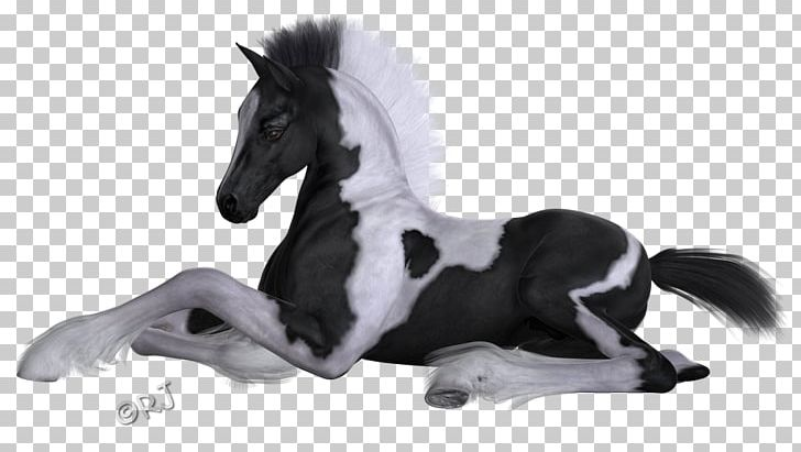 Mane Mustang Stallion Pony Halter PNG, Clipart,  Free PNG Download