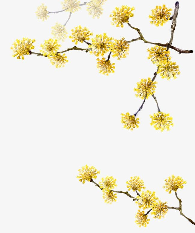 Yellow Flowers Png Clipart Branches Decoration Flowers