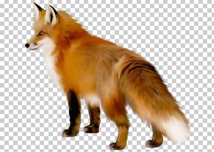 Fox PNG, Clipart, Animal, Animals, Canidae, Carnivoran, Clipart Free PNG Download