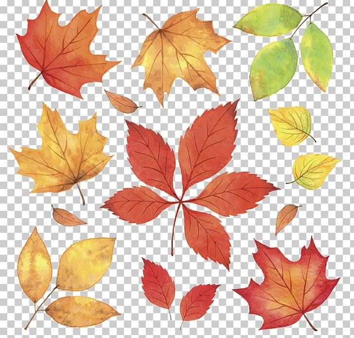 Autumn Leaves Leaf Illustration PNG, Clipart, Autumn, Autumn Benefits, Autumn Harvest, Autumn Indulgence, Autumn Lea Free PNG Download