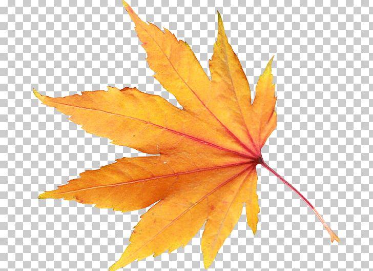Autumn Leaf Color PNG, Clipart, Autumn, Autumn Leaf Color, Autumn Leaves, Beach, Color Free PNG Download