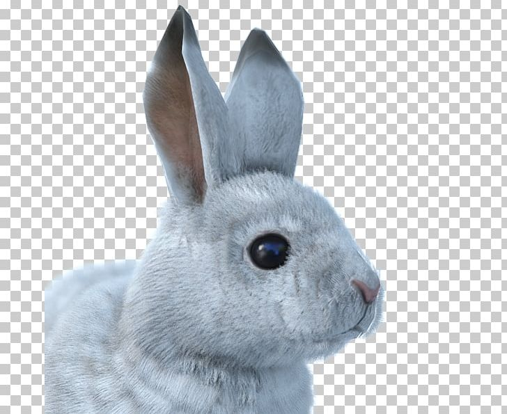 The Hunter Snowshoe Hare Arctic Hare Arctic Fox European Rabbit PNG, Clipart, Animal, Animals, Arctic, Arctic Fox, Arctic Hare Free PNG Download