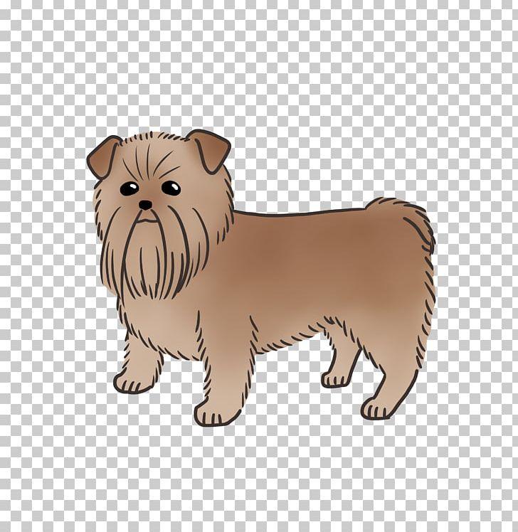 Yorkshire Terrier Norfolk Terrier Cairn Terrier Puppy Dog
