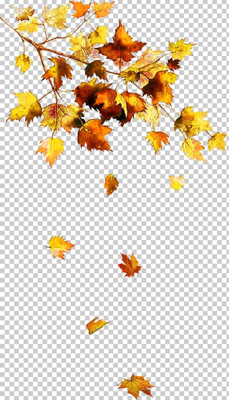 Autumn Leaf Color Autumn Leaf Color Tree Chanson D'automne PNG, Clipart, Autumn, Autumn Leaf Color, Branch, Chanson Dautomne, Clover Free PNG Download
