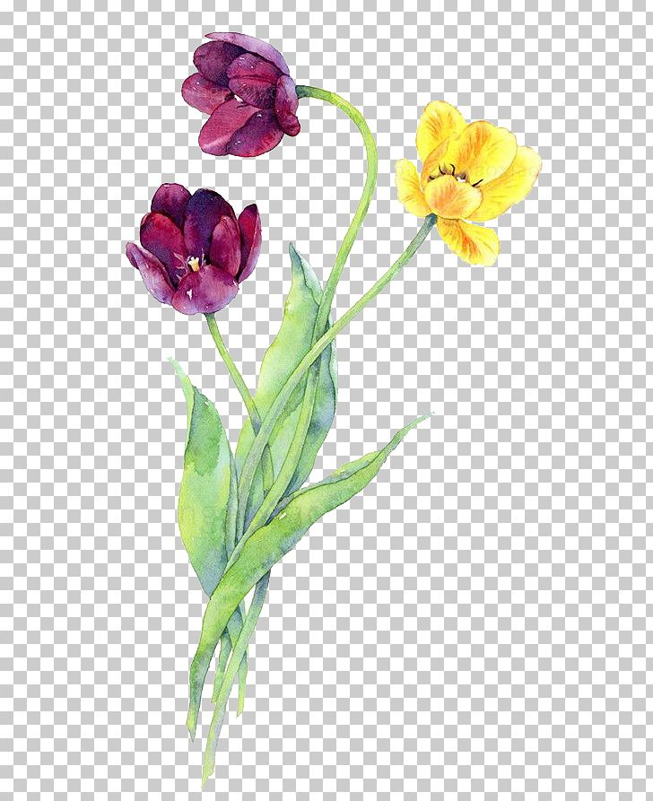 Watercolor Flowers PNG, Clipart, Autumn, Cartoon, Colour, Decorate, Flower Free PNG Download