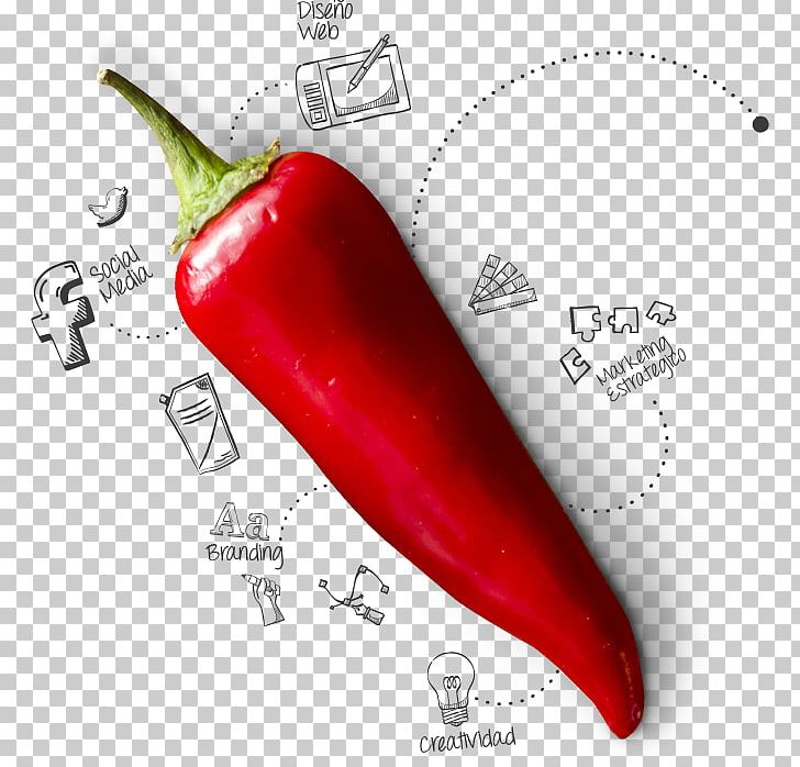 Serrano Pepper Tabasco Pepper Cayenne Pepper Chili Pepper Design PNG, Clipart, Art, Bell Peppers And Chili Peppers, Capsicum, Cayenne Pepper, Chili Pepper Free PNG Download