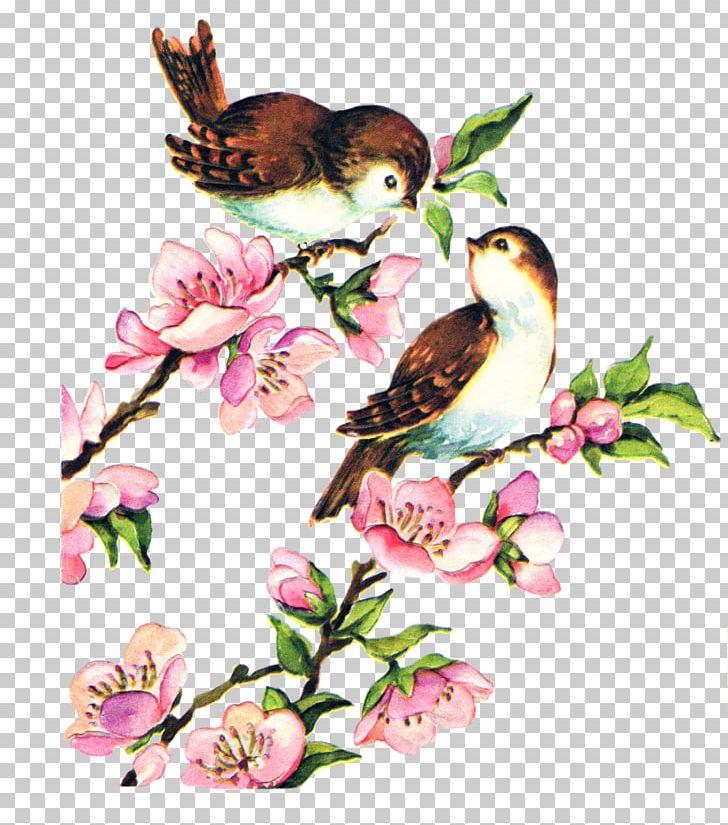 Bird YouTube PNG, Clipart, Animals, Art, Beak, Bird, Blossom Free PNG Download