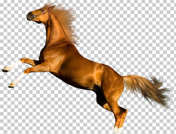 Horse Photography Desktop PNG, Clipart, Animals, Can Stock Photo, Canter And Gallop, Chestnut, Collection Free PNG Download