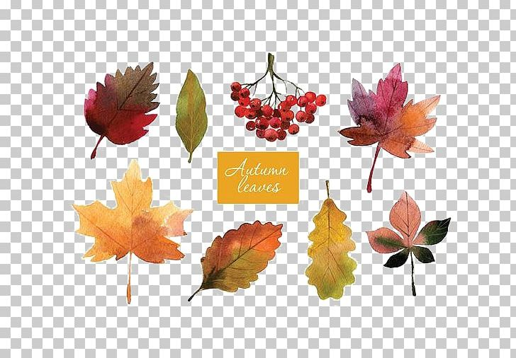 Autumn Leaf Color Autumn Leaf Color Watercolor Painting PNG, Clipart, Art, Autumn, Autumn Leaf Color, Autumn Leaves, Cartoon Free PNG Download