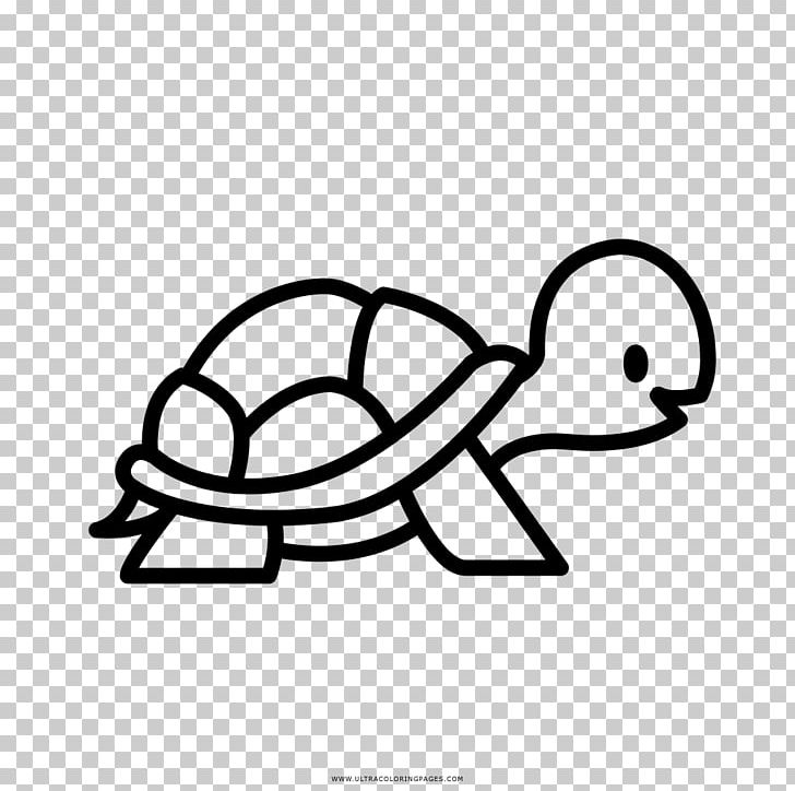 Turtle Coloring Book Drawing Png Clipart Animal Animals