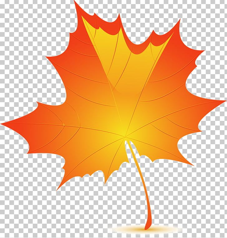 Autumn Leaf Color Birch PNG, Clipart, Adobe Illustrator, Autumn, Autumn Leaf, Autumn Leaf Color, Birch Free PNG Download