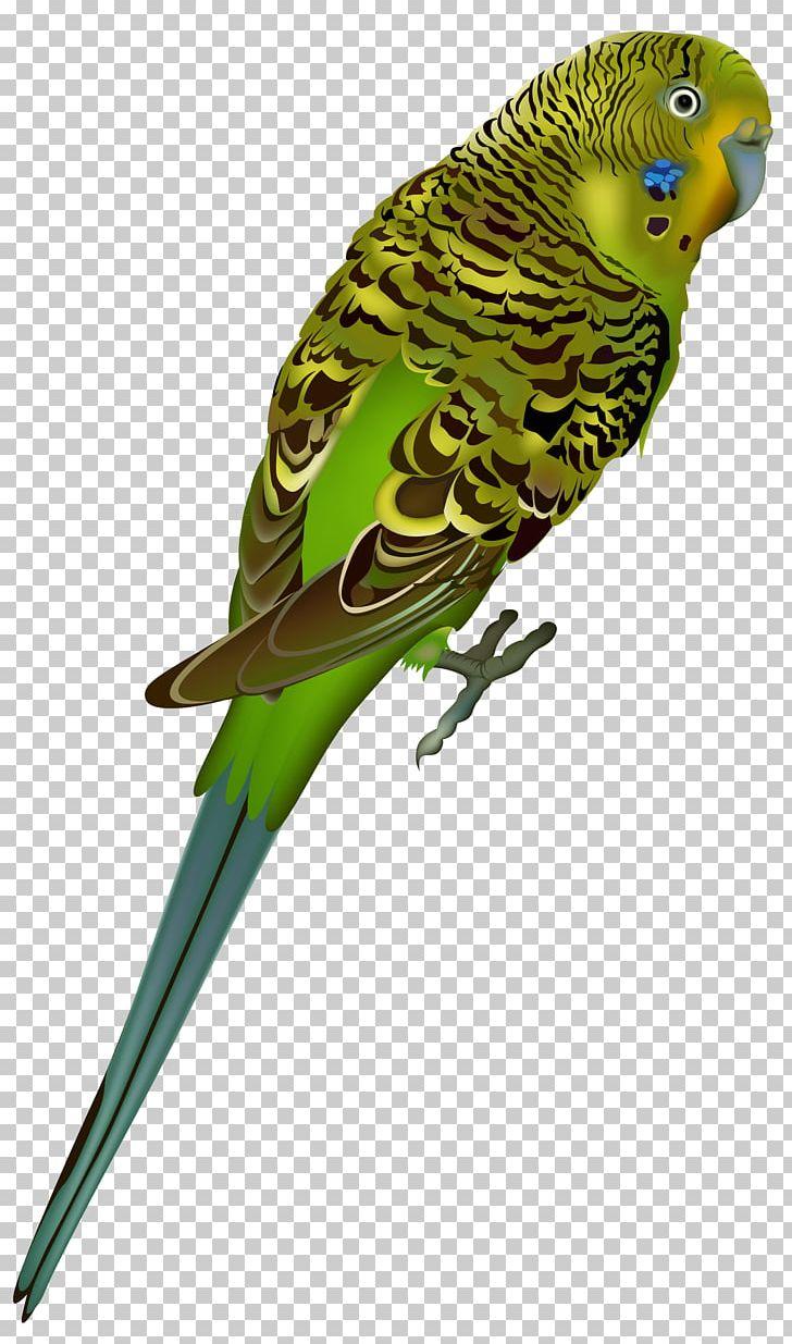 Budgerigar Bird Parrot PNG, Clipart, Beak, Bird, Birds