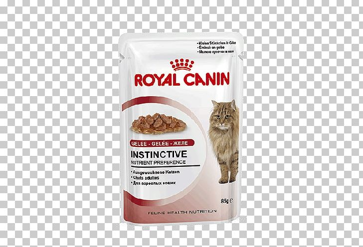 Cat Food Dog Royal Canin Kitten Feline Health Nutrition Kitten Dry Food PNG, Clipart, Animals, Cat, Cat Food, Dog, Dog Food Free PNG Download