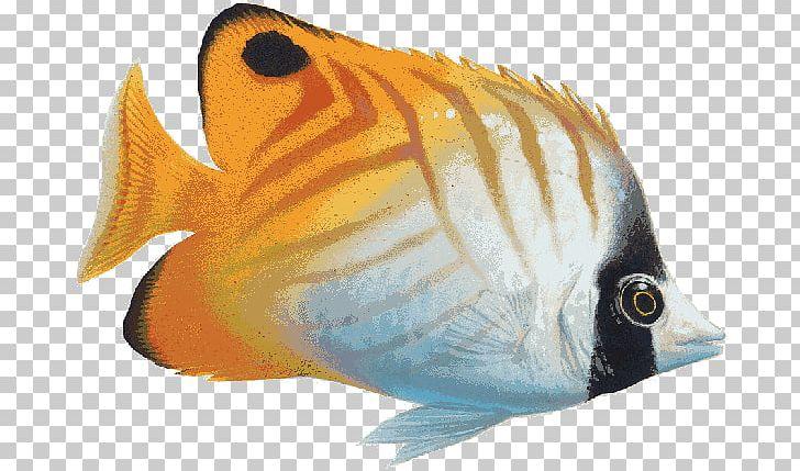 Fish Cliparts Yellow - Coral Reef Fish Fish Clipart, HD Png Download -  kindpng