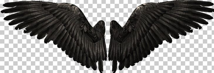 Angel YouTube PNG, Clipart, Aile, Angels Wings, Angel Wing, Angel Wings, Bat Wing Development Free PNG Download