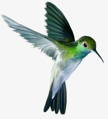 Flying Bird PNG, Clipart, Bird Clipart, Birds, Fly, Flying