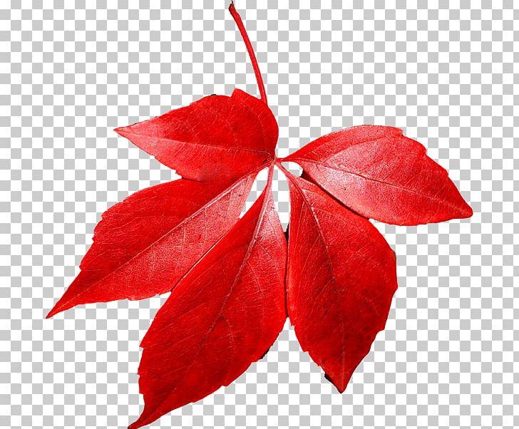 Autumn Leaf Color PNG, Clipart, Autumn, Autumn Leaf Color, Computer Icons, Desktop Wallpaper, Flower Free PNG Download