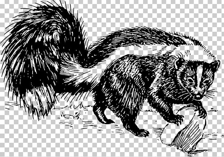 Drawing Skunk Black And White PNG, Clipart, Animal, Animals, Black And White, Carnivoran, Drawing Free PNG Download