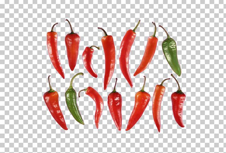 Habanero Piquillo Pepper Serrano Pepper Chile De árbol Jalapeño PNG, Clipart, Chile De Arbol, Habanero, Jalapeno, Piquillo Pepper, Serrano Pepper Free PNG Download