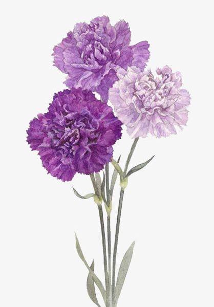Purple Flowers PNG, Clipart, Autumn, Cartoon, Decorate, Flowers, Flowers Clipart Free PNG Download