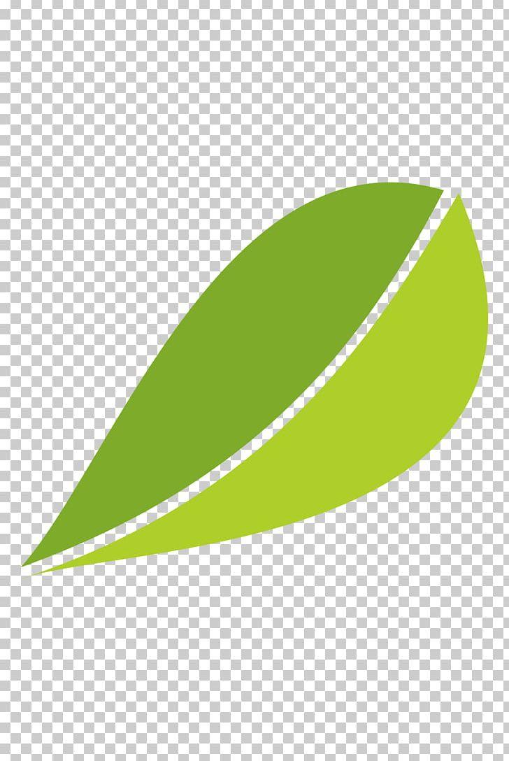 White Tea Fuding Green Tea Leaf Png Clipart Angle Autumn Leaves Camellia Sinensis Fall Leaves Happy