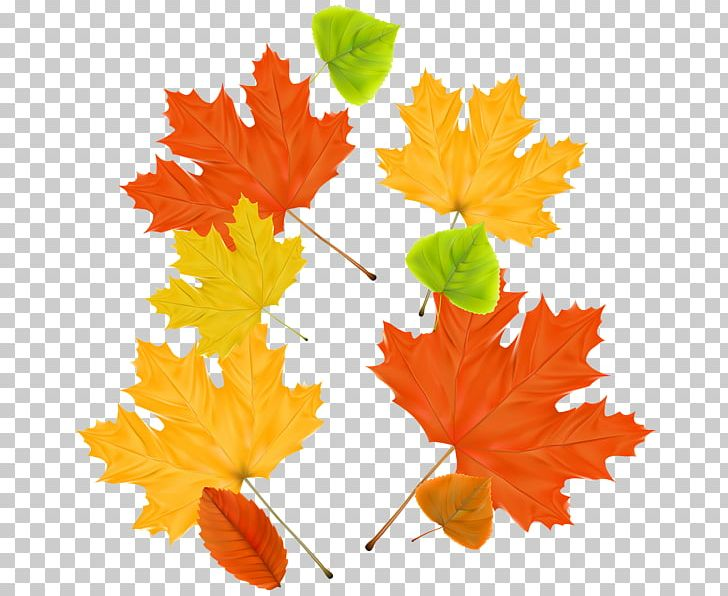 Maple Leaf Autumn PNG, Clipart, Autumn, Autumn Leaves, Download, Flowering Plant, Leaf Free PNG Download