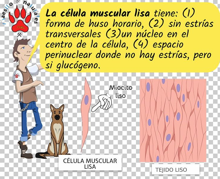 CmapTools Myocyte Cell Striated Muscle Tissue PNG, Clipart, Animal, Area, Carnivoran, Cartoon, Cat Like Mammal Free PNG Download