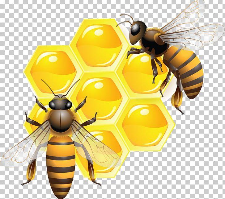 Honey Bee PNG, Clipart, Arthropod, Bee, Beehive, Bumblebee, Clip Art Free PNG Download