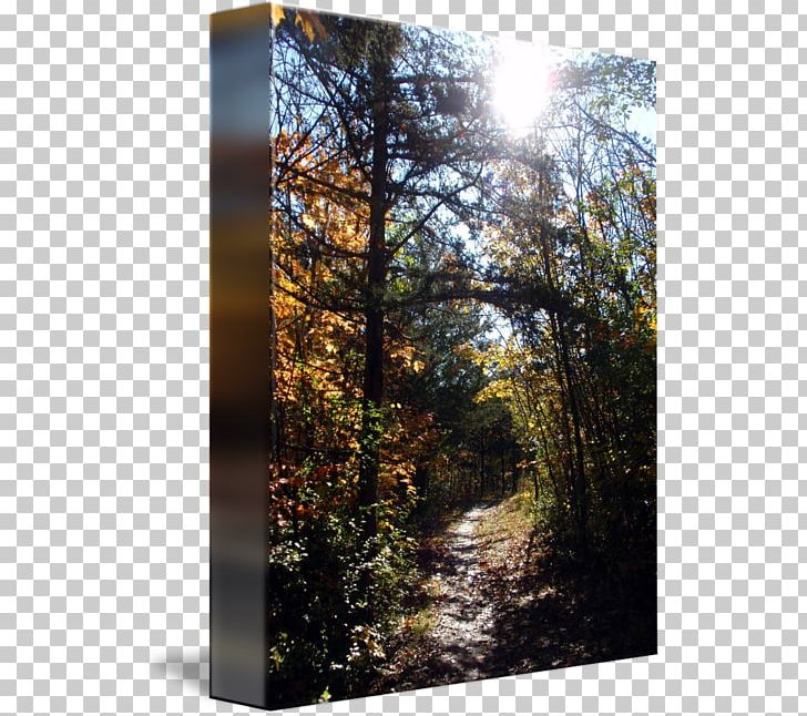 Temperate Broadleaf And Mixed Forest Woodland Tree Sunlight PNG, Clipart, Autumn, Biome, Broadleaved Tree, Forest, Forest Path Free PNG Download