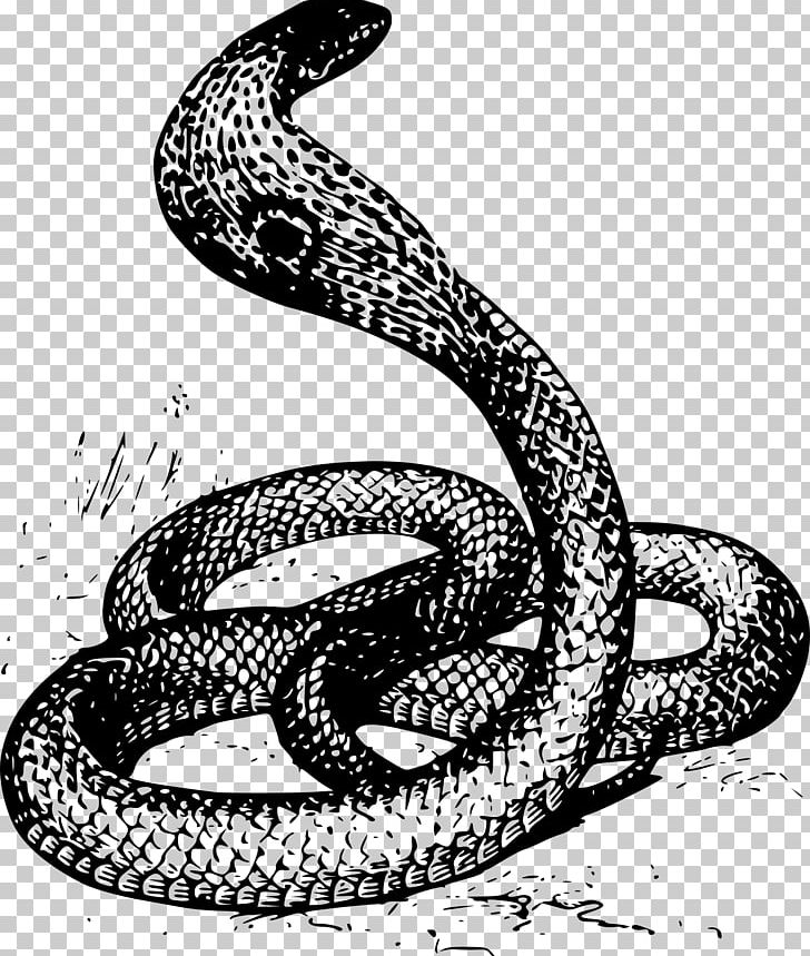 Snake Drawing Cobra Png Clipart Animals Art Black And